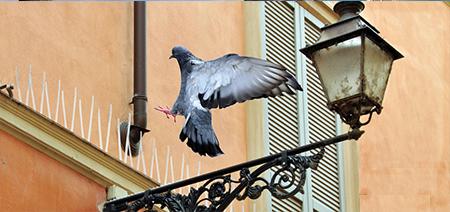 Да предпазим фасадата с шипове против птици